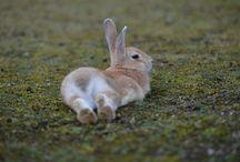 зайки_кролики