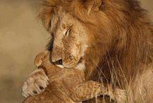 äidin rakkautta