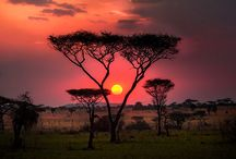"Tansania / Fotos im Rahmen der ""Usambarareise"" mit ""Taruk International"" durch Tansania"