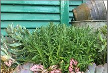 Growing Gardens / Gardening tips, tricks and more. Plant and grow your own fresh vegetables, herbs and pretty flowers.