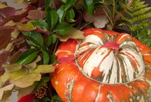 Celebrate the Holidays in the Garden / Festive container gardens, holiday wreaths and pretty porches