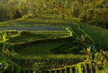 Bedugul - BALI / Bedugul - BALI, place of interest
