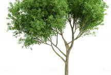 Photoshop   drzewa