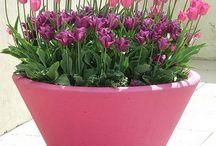 Garden - Plant Care Tips