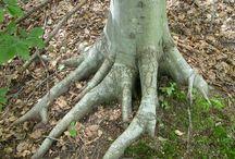 roots - radici