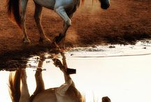 Horses / Horses, horses, horses - beauty in motion.