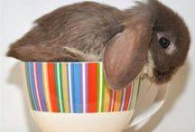 Animals Love Coffee, Too / Cute animals and their coffee.