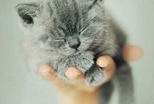 Cute...so cute