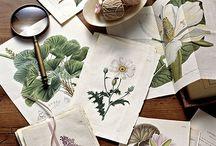 ART : Botanical prints & Illustrations / Botanical books, Flora, flower books (and plants ), botanical prints, botanical illustrations / by Johana Ufa