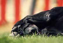 Fotografía canina. Gea / Sesión fotográfica que Mr Trufa a dedicado a su perrita Gea.