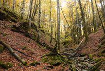 Bosque Mágicos: Hayedo de Montejo / Una paseo por el Hayedo de Montejo