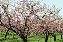Peach Orchard Tea Party Nursery Theme / by Kendel R