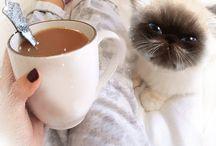 cafe şi pisoi