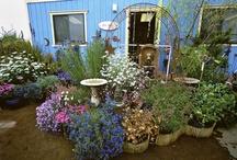 garden...  annie's annuals