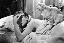 kittenism / cats, kittens, fur, pur