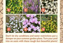 drought plants