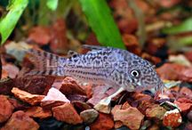 Inspiration: Aquariums and Ponds / FRESHWATER AQUARIUM IDEAS AND SUPPLIES
