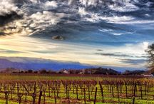 Views of The Valley / Photographs of Napa Valley landscape