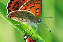 Po prostu owady..bo ciężko sklasyfikować... ;))