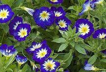 πρωινο λουλουδι