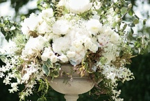 White Gardens / White glows in the garden at dusk and overcast days, and helps other plants pop in the landscape!