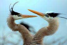 Tapety - ptaki