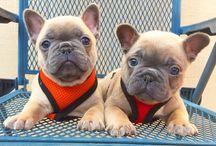Pupy and dog
