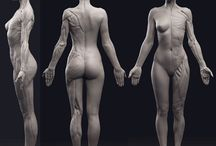 Anatomy_Woman