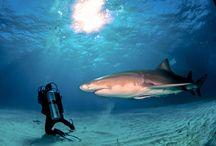 Scuba Diving / Explore the wilderness beneath the waves..