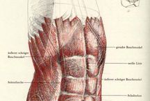 Kresba těla