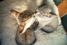 Cats awwwww
