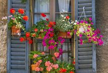 Davanzali fioriti