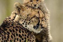 Being held