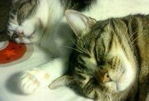 i miei gattini...