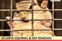 Squirrel Removal / by Atlanta Squirrel & Rat Removal