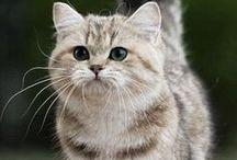 Meooow
