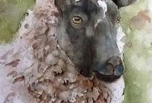 Sheep to paint