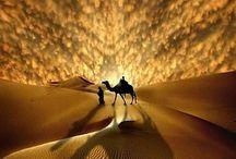 Песок животные люди