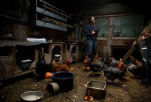 Poultry in Motion / by Backyard Industry