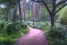 Trees / Trees, forests, woodland