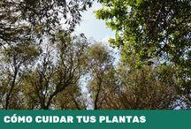 GUÍA - CÓMO CUIDAR TUS PLANTAS