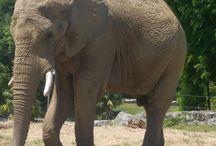 Zoo / elephant - rhino - rhinocéros
