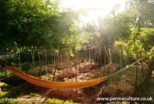 Permaculture and veggies