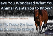 Free Offers / Free Offers From Freedom Reins