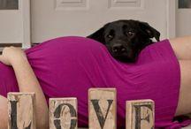 maternity  photos with a dog