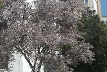 Spring spirit / flowers