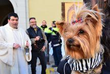 Sant Antoni Abad Tarragona / Een boxer op leren muiltjes, een dalmatiër in tutu, chihuahua's met strikken, stoere herders gewoon als zichzelf, langharige cavia's in rieten mandjes, vuilnisbakken in bontjasjes, langoren in koffers, leguanen aan de riem, kaal geplukte kippetjes, kwetterende kanaries, een heuse priester in witte jurk, een bakje weiwater met kwast. Sant Antoni Abad in een notendop.