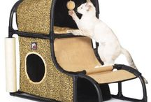 Cool Cat Accessories and Toys