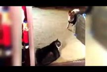 Some of the best dog videos / A compilation of some of the best dog videos that we have seen