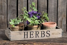 Herbs / by Kathleen Allfrey